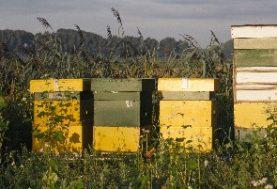 Wist je dit over honing?