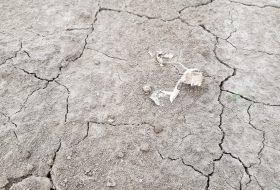 De droogte in beeld